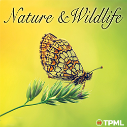 Nature & Wildlife